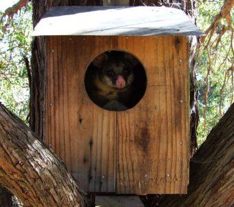 possum boxes