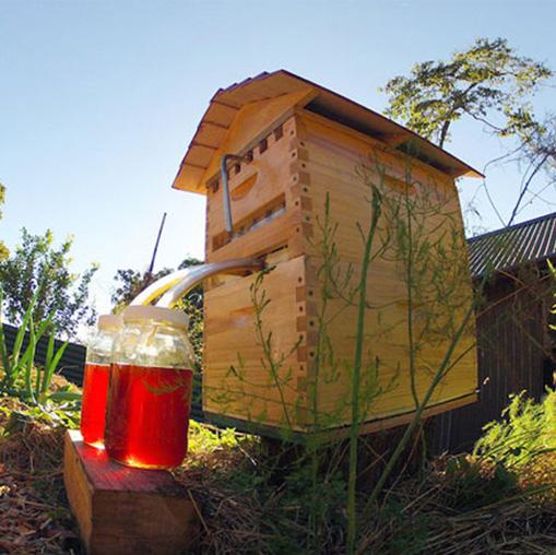 Native bee hive producing honey