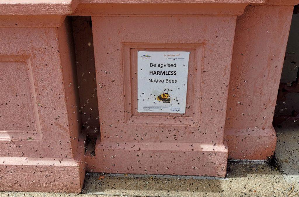 Native Bees in the Bundaberg CBD